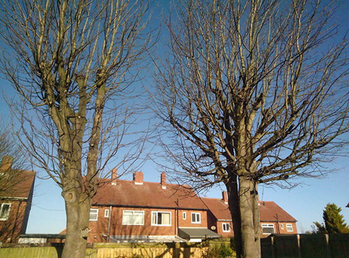 Tree Work - Arborist Sunderland