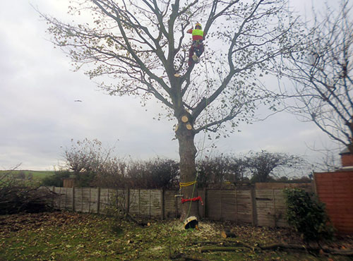 Tree Work Sunderland