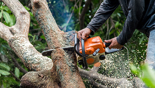 North East - Tree Work Services